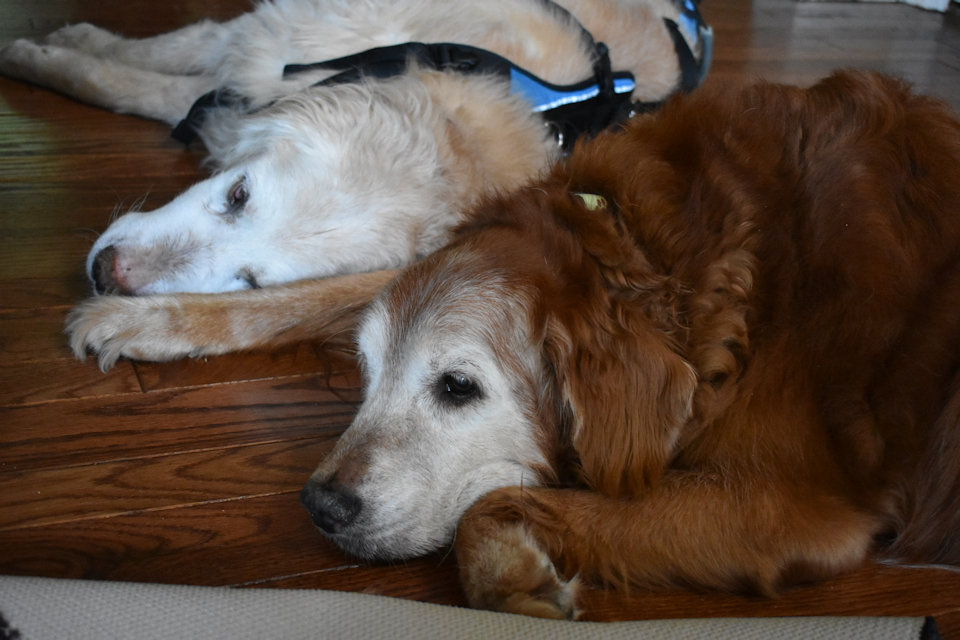 Rocky and Pumpkin, two beloved members of the Heisler home.