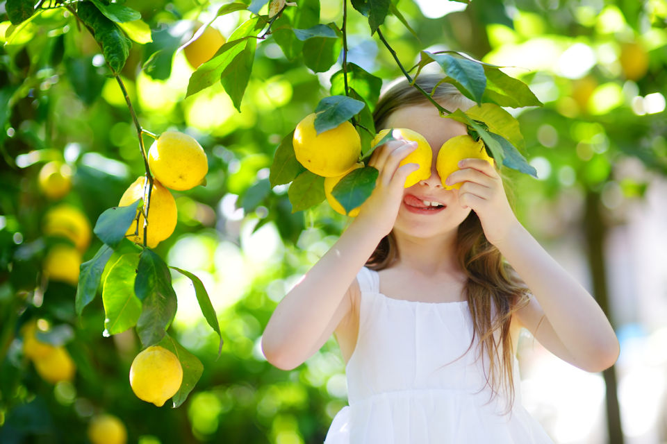 Girl picking lemons to make lemonade
