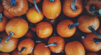 Colorful photo of pumpkins