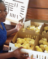 Averting a hunger disaster with chickens