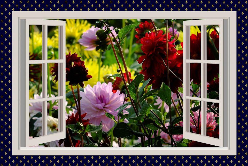 Window full of flowers