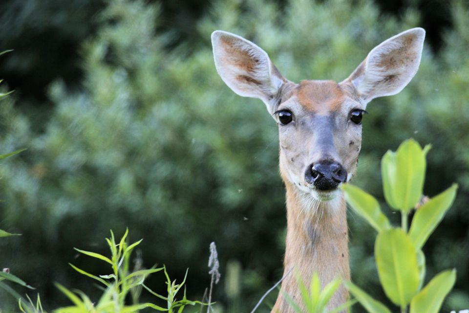 A deer reminds Elizabeth of God